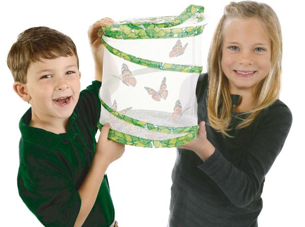 Frisch geschluepfte Schmetterlinge